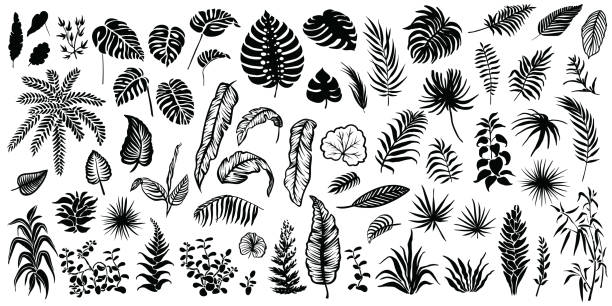 tropical leaves vector silhouettes. - palm leaf stock illustrations, clip art, cartoons, & icons