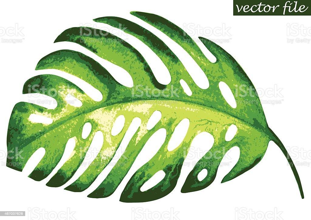 Hoja monstera Tropical - ilustración de arte vectorial