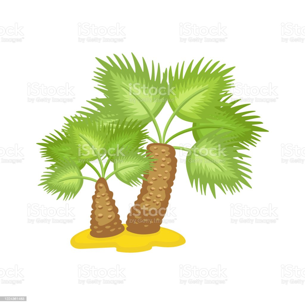 Tropical Or African Palm Tree On Sand Flat Cartoon Vector Illustration Isolated Stock Illustration Download Image Now Istock A solitary tree, with few leaves but filled with large and small wild animals, dominates the left side of the frame. https www istockphoto com vector tropical or african palm tree on sand flat cartoon vector illustration isolated gm1224361483 359975597