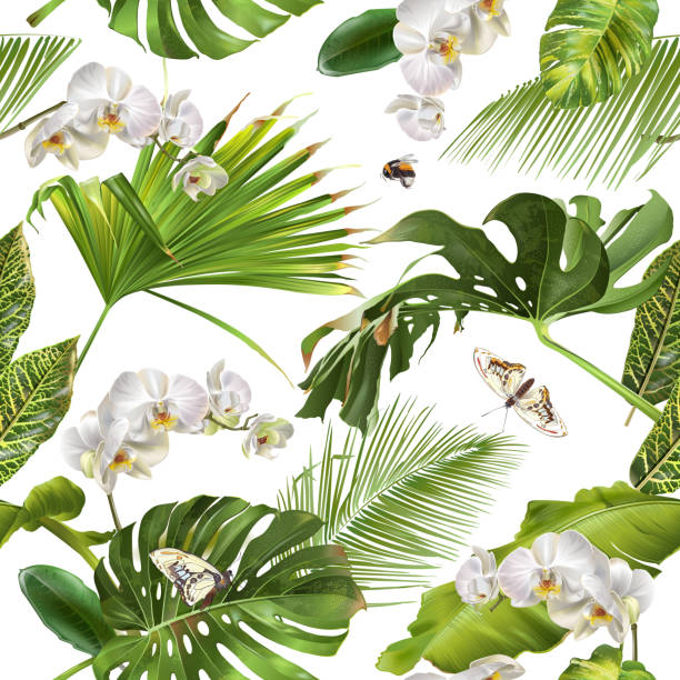 Tropical orchid white pattern Vector botanical seamless pattern with tropical leaves, orchid flowers and butterflies on white. Background design for cosmetics, spa, wedding, web page. Best for hawaiian style print, wrapping paper orchid stock illustrations