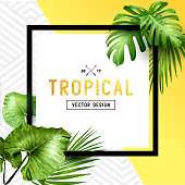 Tropical Palm Leaf Border Design