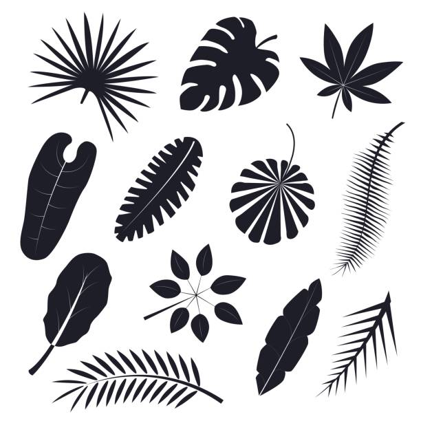 Tropical Palm Leaves Black Silhouettes Set Vector Art Illustration