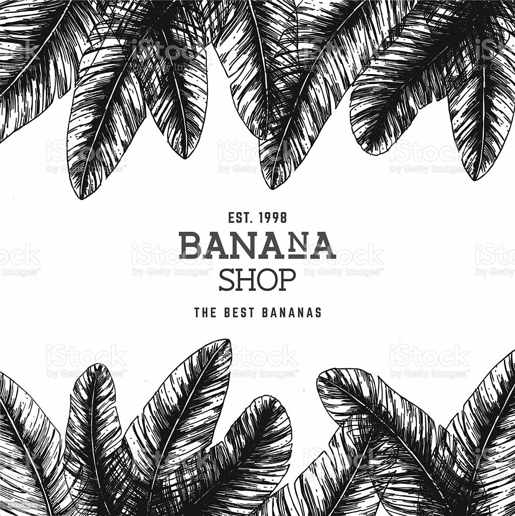 tropical palm leaves design template vector illustration stock