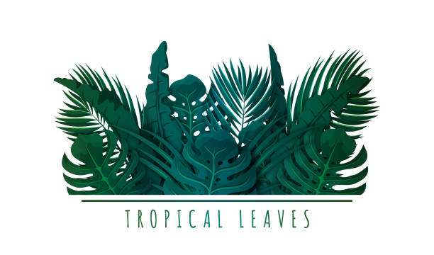 Tropical palm leaves. Exotic leaves and plants. Floral background for banner, flyer or invitation design. Green jungle foliage vector art illustration