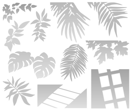Tropical Palm Leaves, Plant and Window Shadows set