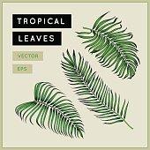 Tropical palm leaves set. Exotic tree branches. Jungle foliage design element. Botanical illustration. Areca palm. Vintage floral drawing. EPS 10.