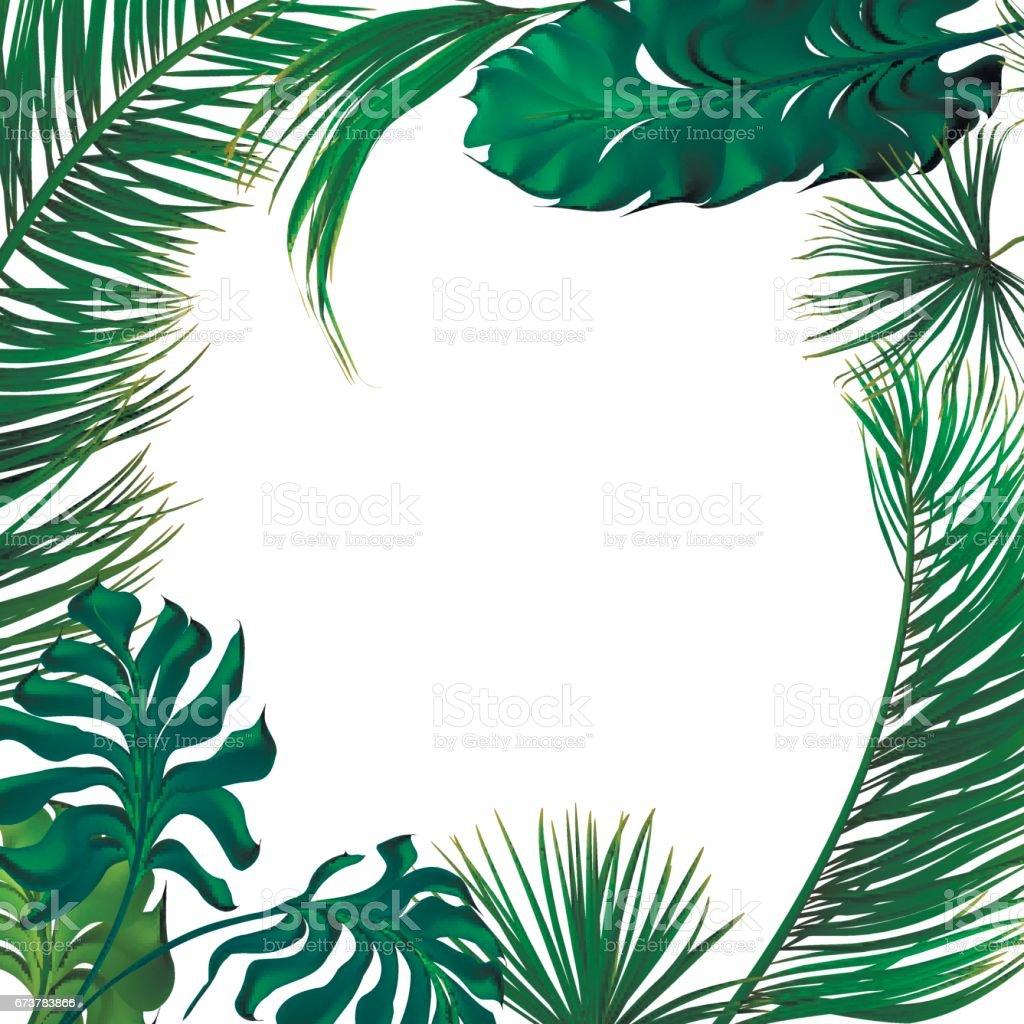 Palmiers tropicaux feuilles ensemble. palmiers tropicaux feuilles ensemble – cliparts vectoriels et plus d'images de art libre de droits