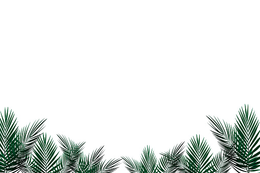 tropical palm leaves