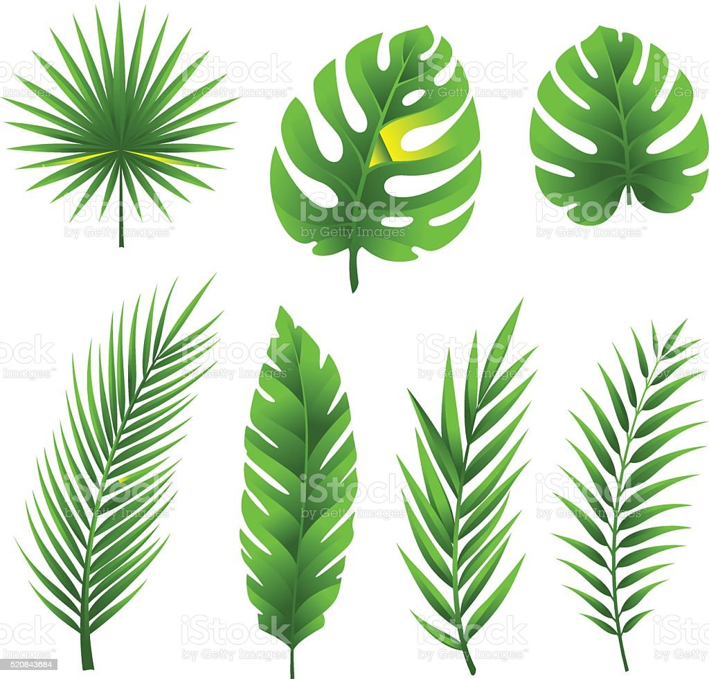 Tropical palm tree leaves collection. vector art illustration