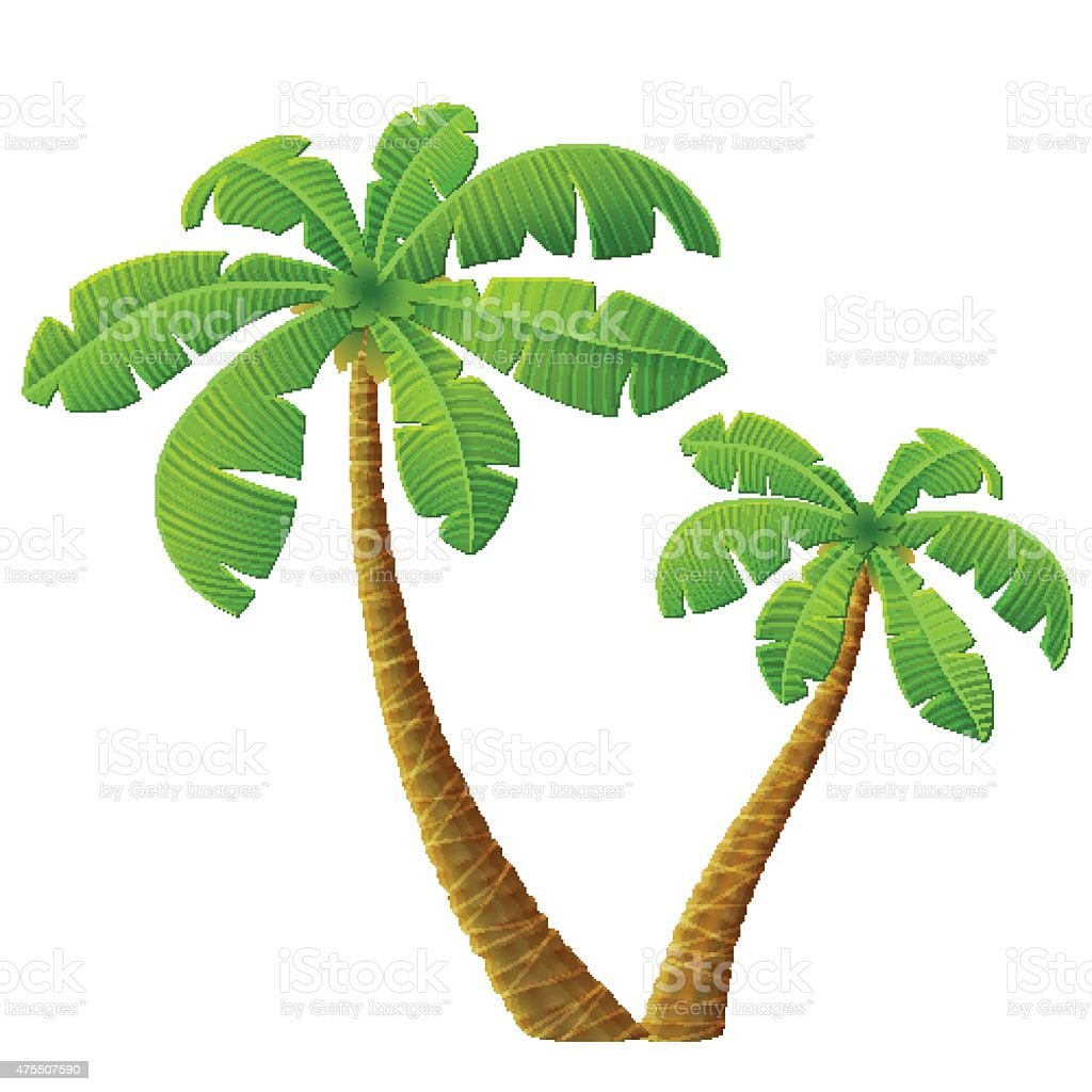 Tropical palm tree with leaves vector art illustration