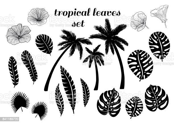 Free black and white palm tree Images, Pictures, and