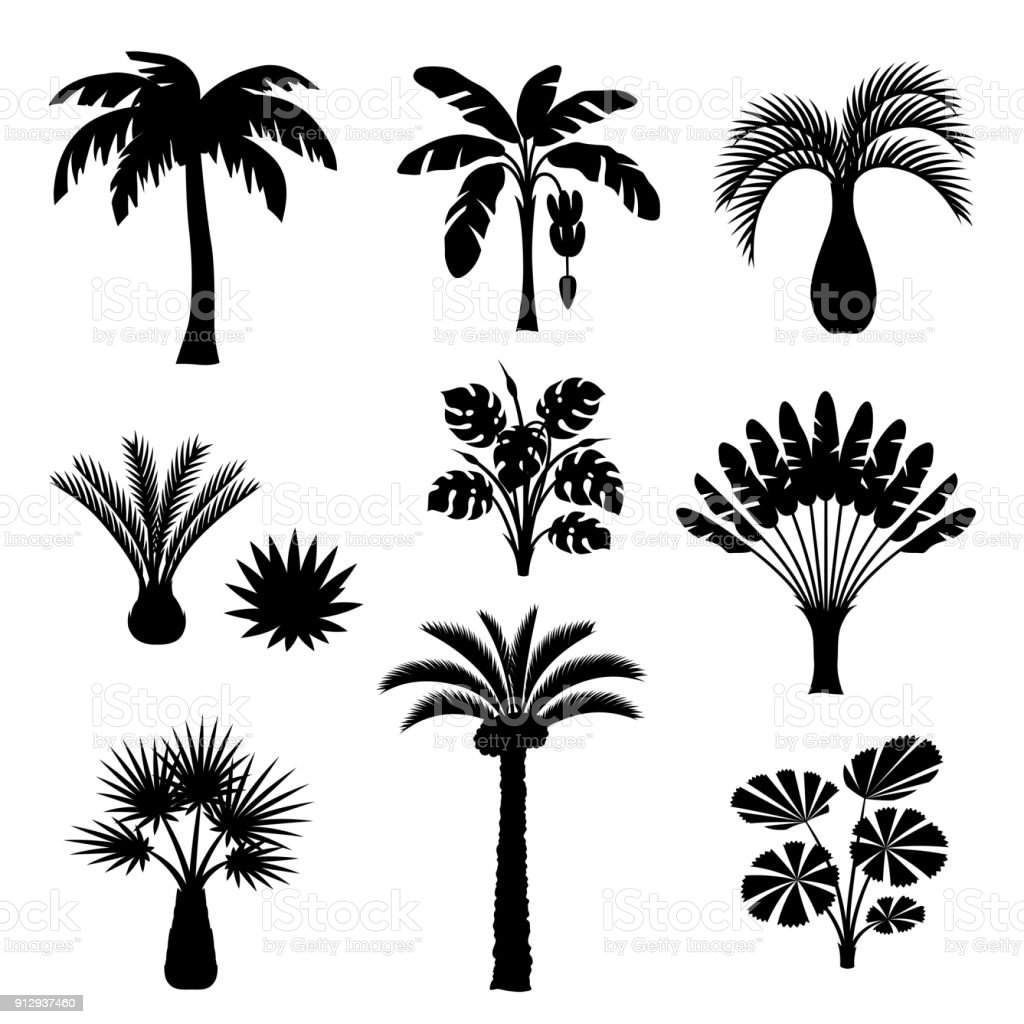Tropical palm trees set. Exotic tropical plants Illustration of jungle nature
