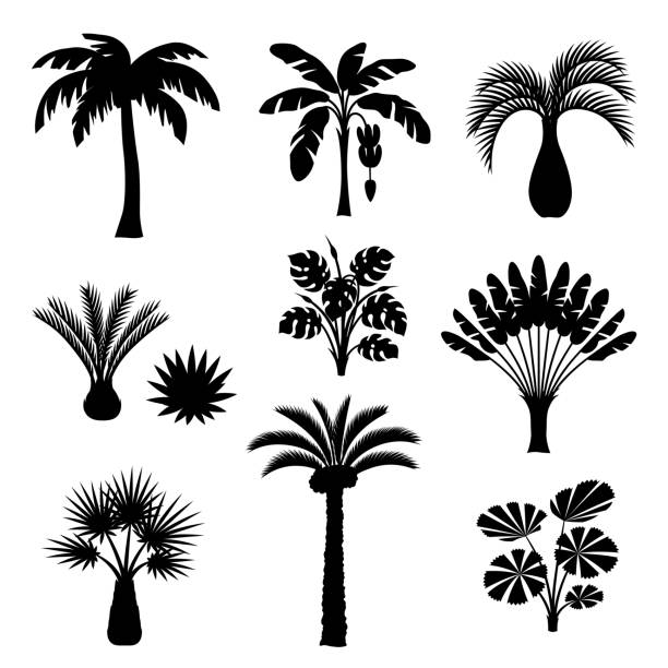 tropical palm trees set. exotic tropical plants illustration of jungle nature - palm tree stock illustrations