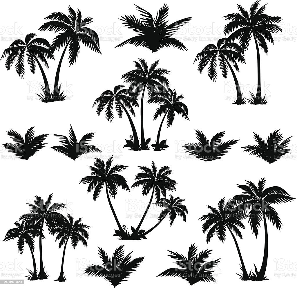 Tropical palm trees set silhouettes vector art illustration