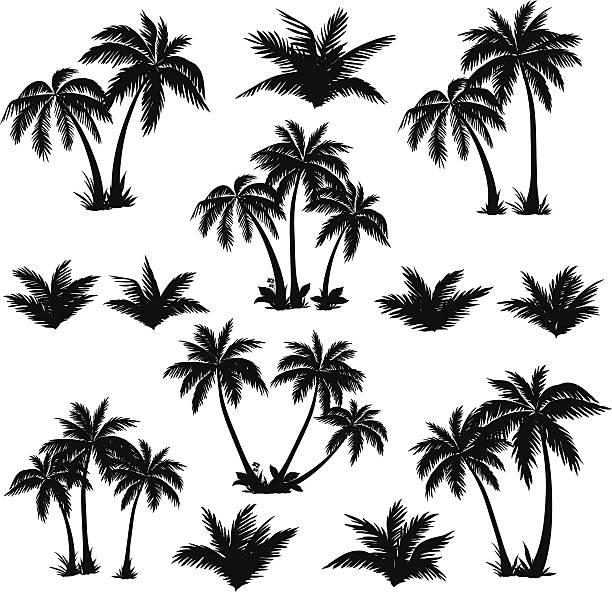ilustrações, clipart, desenhos animados e ícones de conjunto de silhuetas de palmeiras tropicais - coqueiro