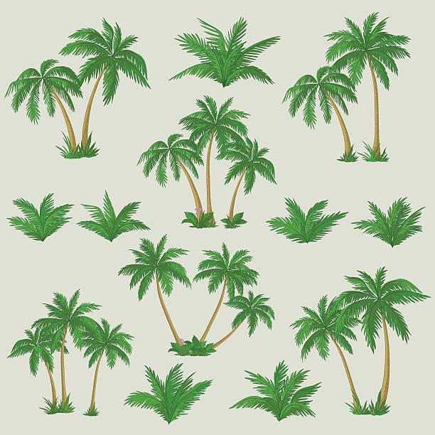 ilustrações, clipart, desenhos animados e ícones de palmeiras tropicais conjunto - coqueiro