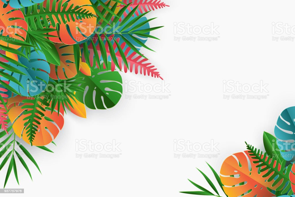 Tropical Paper Palm Monstera Leaves Frame Summer Tropical Leaf ...