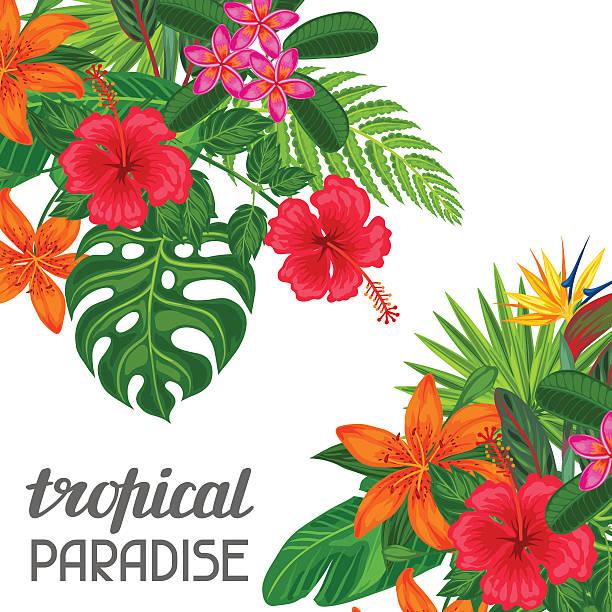 tropisches paradies-karte mit stilisierten blätter und blumen. bild für - hibiskusgarten stock-grafiken, -clipart, -cartoons und -symbole