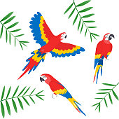 Tropical parrots collection. Vector isolated elements on the white background. Ara parrot. Macaw.