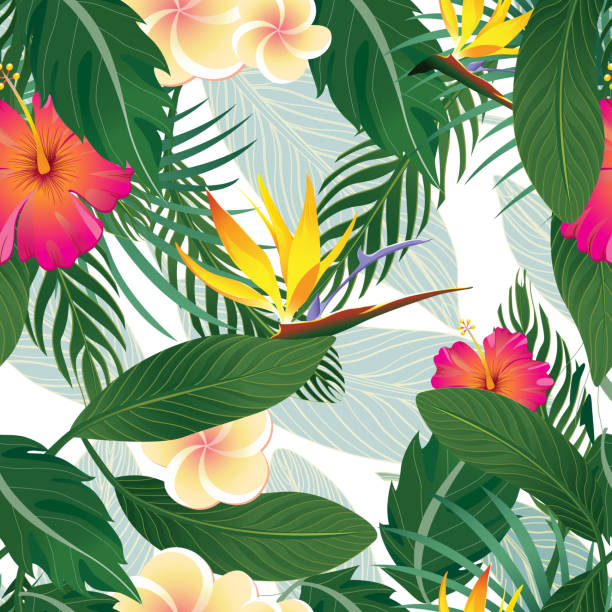Tropical Pattern Isolated on White Background - Vector Illustration Tropical Pattern Isolated on White Background - Vector Illustration bird of paradise plant stock illustrations
