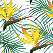 Tropical Pattern Isolated on White Background - Vector Illustration