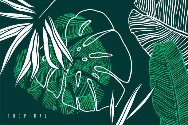 熱帶圖案與棕櫚樹葉, 香蕉和怪物葉。手繪熱帶樹葉。異國情調的綠色背景。 - 大自然 幅插畫檔、美工圖案、卡通及圖標