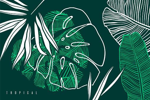 熱帶圖案與棕櫚樹葉 香蕉和怪物葉手繪熱帶樹葉異國情調的綠色背景向量圖形及更多具有特定質地圖片