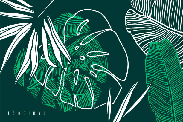 tropical pattern with palm tree leaf, banana  and monstera leaves. hand drawn tropic foliage. exotic green background. - palm tree stock illustrations