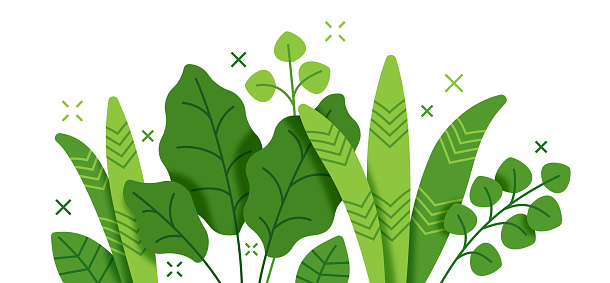 Tropical leaf and plant undergrowth forest foliage growth border line drawing.