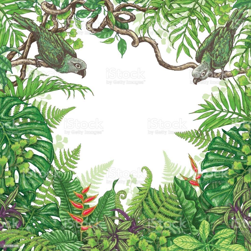 Tropik bitkiler ve ku lar er eve stok vekt r sanat amazon b lgesi nin daha fazla g rseli - Marcos para plantas ...