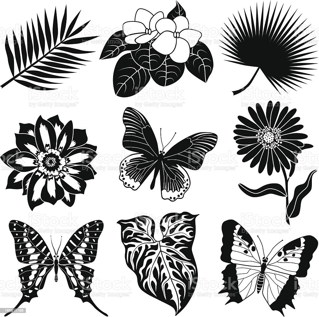 tropical plants and butterflies