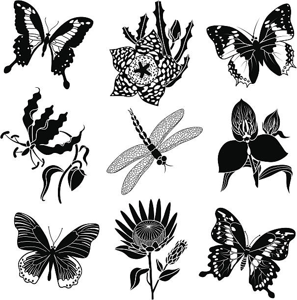 Best Icon Set Exotic Tropical Rainforest Flowers In Full