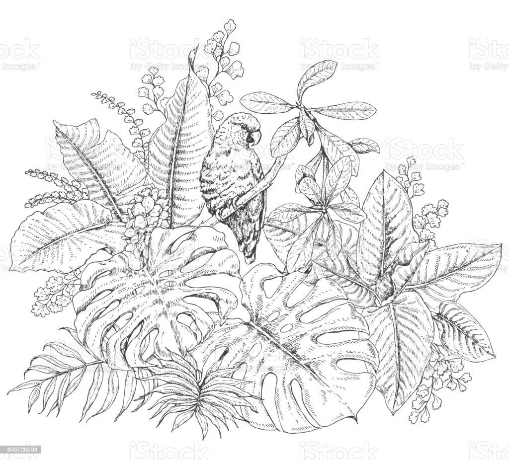 Amazon Rainforest Black And White Clip Art - World Wide Clip Art ...