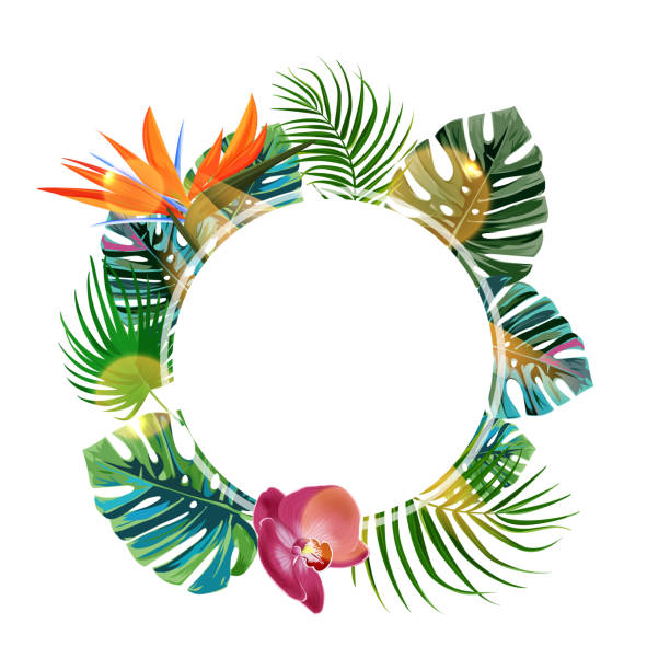 Tropical plants cicle design template. Bird of paradise, monstera, palm leaves composition with blanс space. Tropical plants cicle design template. Bird of paradise, monstera, palm leaves composition with blanс space. beach borders stock illustrations