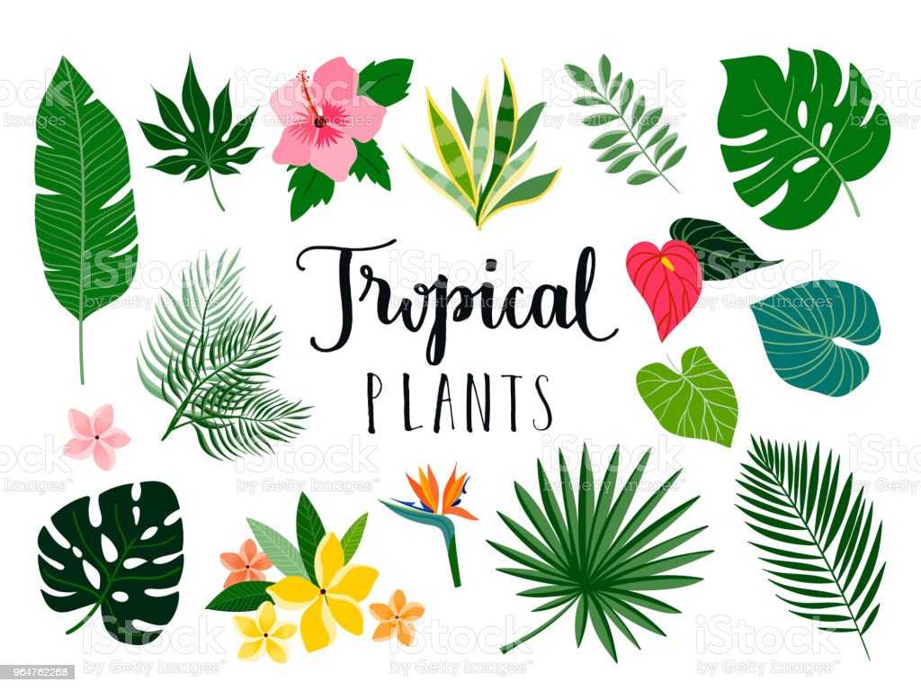 Tropical plants collection royalty-free tropical plants collection stock illustration - download image now
