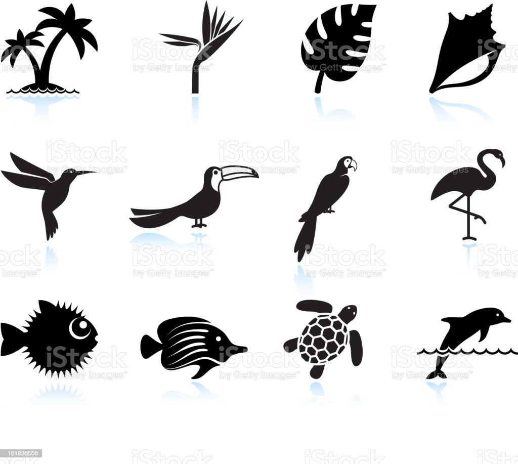 tropical plants fish and birds black & white icon set vector art illustration
