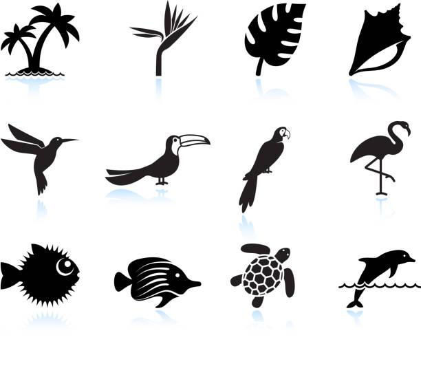 tropical plants fish and birds black & white icon set vector art illustration