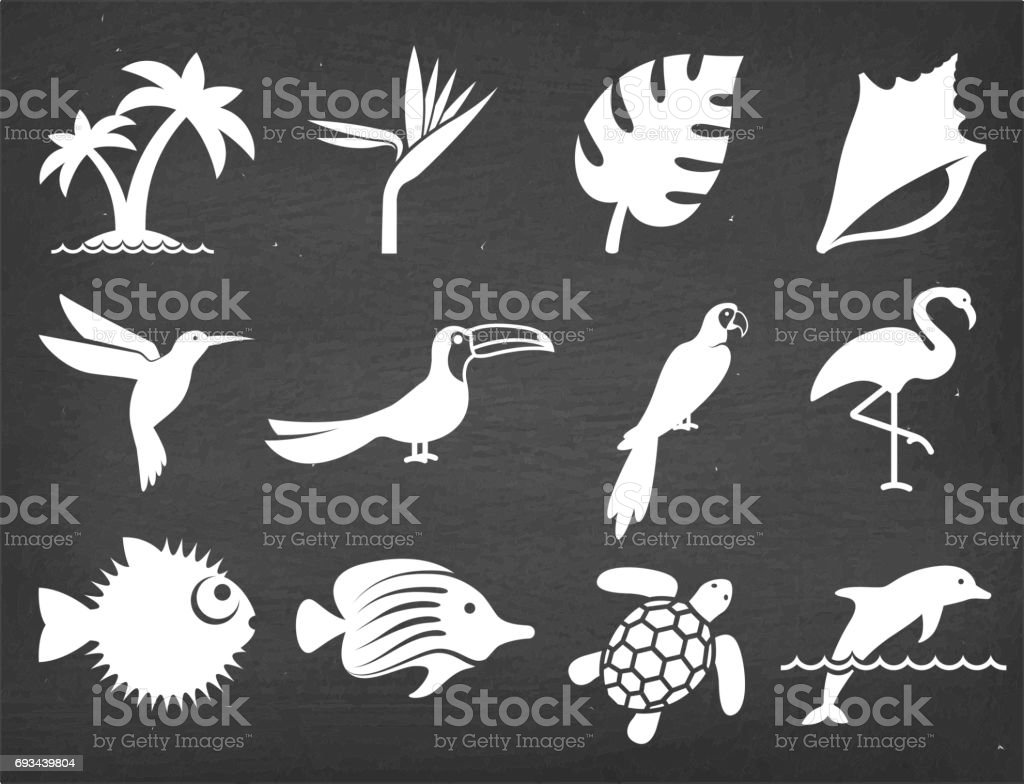 Tropical plants fish and birds on Black Chalkboard Vector Icons vector art illustration