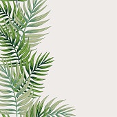 Tropical Plants Leaves Background