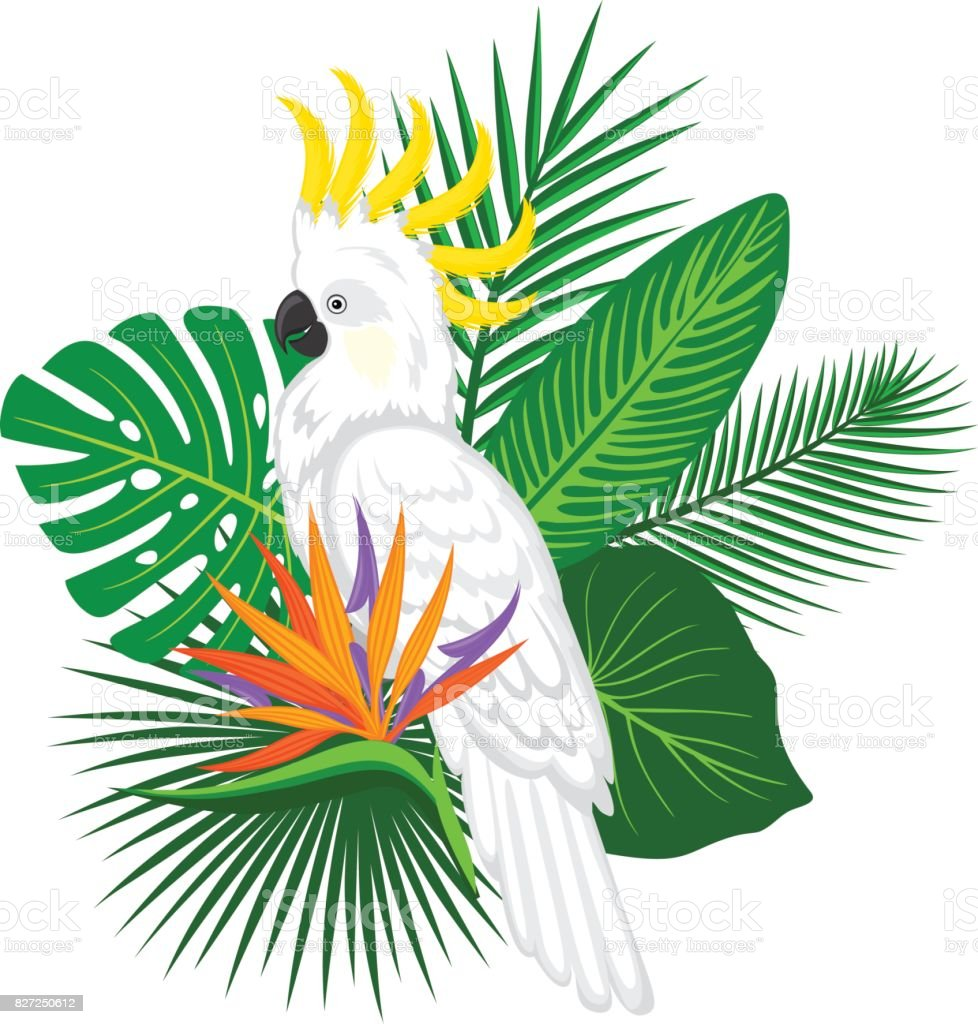 tropical plants leaves flower arrangement with cockatoo parrot vector art illustration