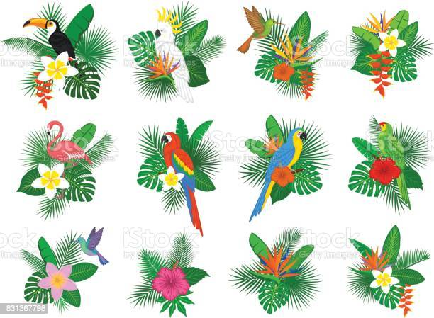Tropical plants leaves flower arrangements with flamingo parrots toco vector id831367798?b=1&k=6&m=831367798&s=612x612&h=h8wog5uocdbip7dbqxlb1audiqhbpc07vwduyaiebl0=