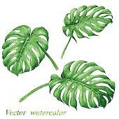 Set of watercolor tropical plants  leaves.