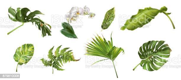Tropical plants set vector id879810008?b=1&k=6&m=879810008&s=612x612&h=gbv27lmuuizbosfubstyb1rdze8avezxvkzhjbgcf3g=