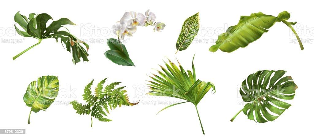 Tropische planten setvectorkunst illustratie