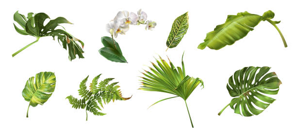 Tropical plants set Vector realistic illustration set of tropical leaves and flowers isolated on white background. Highly detailed colorful plant collection. Botanical elements for cosmetics, spa, beauty care products tropical flower stock illustrations