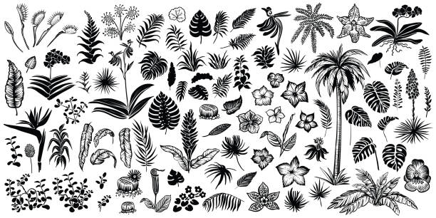 Tropical plants silhouette. Exotical leaves and flowers vector illustration. Tropical plant silhouette. Exotical leaves and flowers vector line sketches, palm, yucca, orchid, strelitzia, monstera and other resort plants black and white illustrations. hawaiian culture stock illustrations