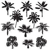 Tropical plant set. Black silhouettes of palm trees, banana plants, washingtonia, monstera on white.
