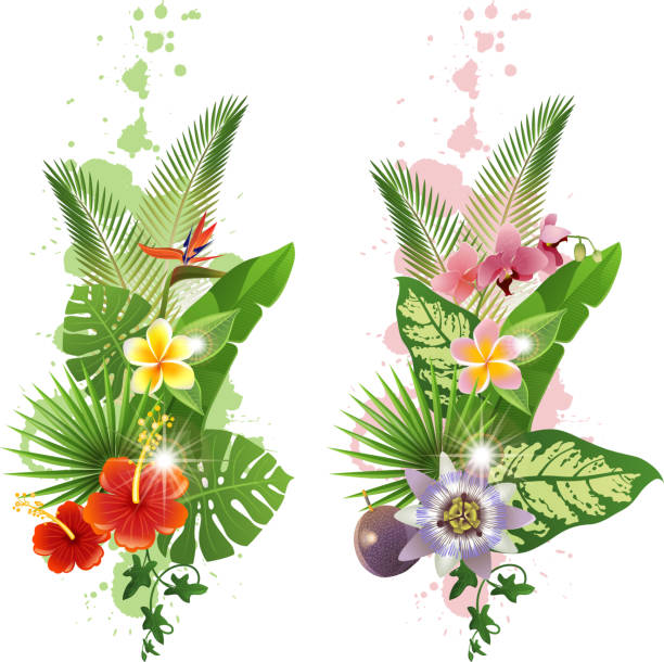 Tropical plants Bright tropical leafs and flowers - vector. EPS 10. File contains transparences! banana borders stock illustrations