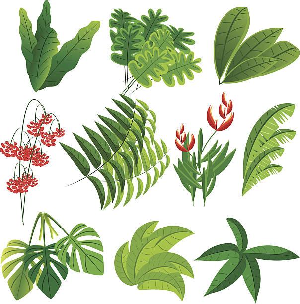 Tropical plants Vector Tropical plants amazon stock illustrations