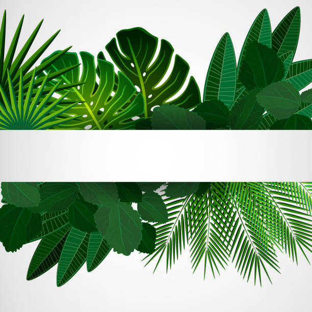 Royalty Free Monstera Deliciosa Clip Art Vector Images Amp Illustrations Istock